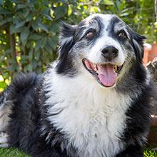 Max der Hund